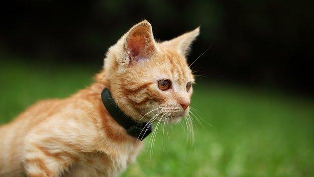 Wie Technologie hilft, vermisste Tiere zu finden (Bild: thinkstockphotos.de)