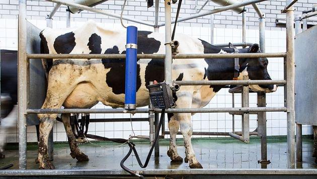 Greenpeace fordert Wandel der Milchwirtschaft (Bild: Fred Dott)