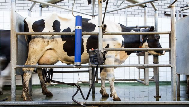 Milch- und Fleischpreise schaden Mensch und Tier (Bild: Fred Dott)