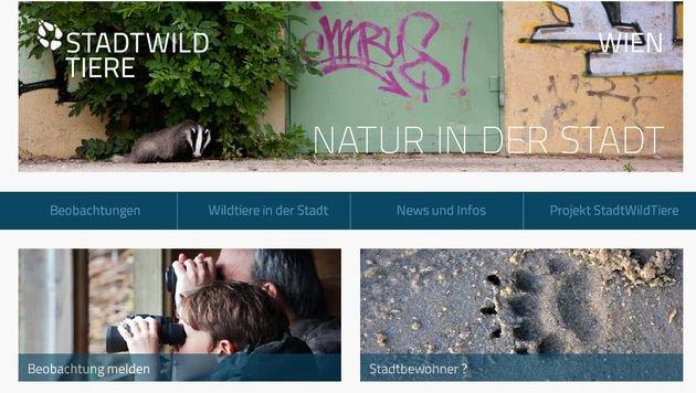 Neue Internetplattform für Wildtierbeobachtungen (Bild: Screenshot www.stadtwildtiere.at)