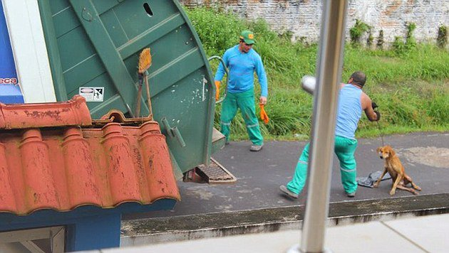 Der Mann wurde dabei fotografiert, wie er den verletzten Hund zum Müllwagen schliff und hineinwarf. (Bild: privat)