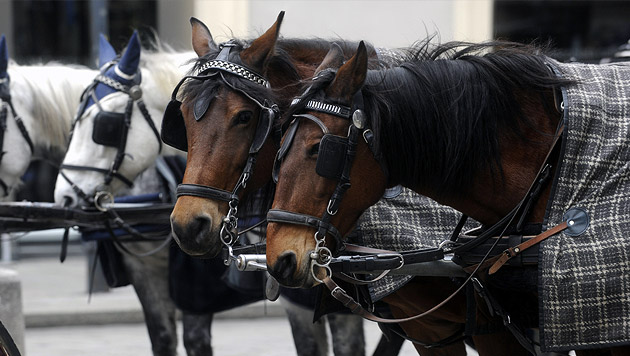 Fiaker-Pferde bekommen hitzefrei - ab 35 Grad (Bild: APA/HERBERT PFARRHOFER)