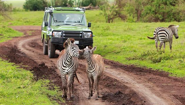 Frau nach Safari-Unfall aus Tiefschlaf erwacht (Bild: thinkstockphotos.de (Symbolbild))
