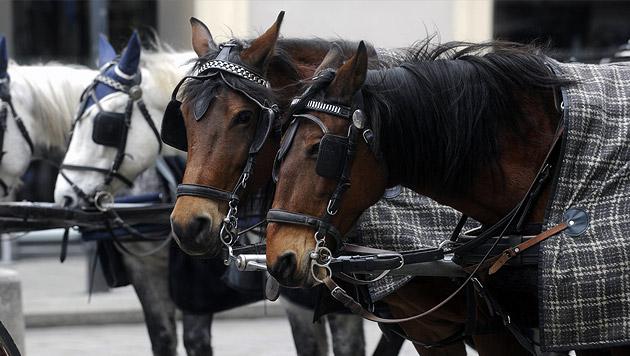 Pferdegespann geht durch: Fiaker schwer verletzt (Bild: APA/HERBERT PFARRHOFER)