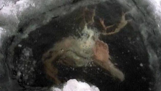 Was treibt hier unter der zugefrorenen Wasseroberfläche?