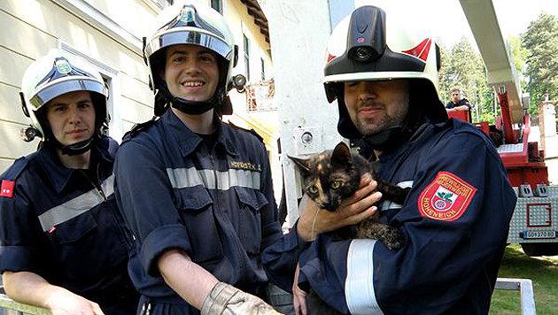 Samtpfote gerettet: Beherzte Feuerwehrleute bargen das Tier und beruhigten es. (Bild: Feuerwehr Gmünd)