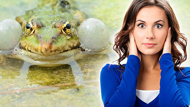 Nächtliches Froschkonzert keine Lärmbelästigung (Bild: Thinkstockphotos.de (Symbolbild))