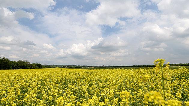 Wetter bleibt wechselhaft (Bild: APA/Roland Schlager)
