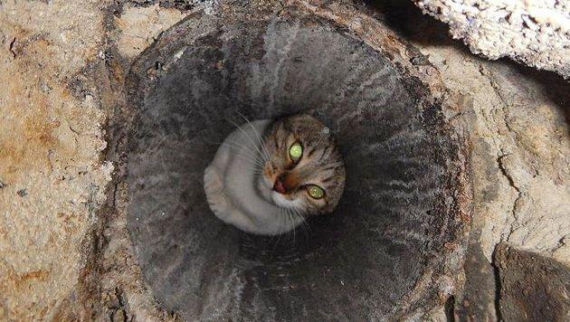Feuerwehr rettete in Rauchfang feststeckende Katze (Bild: APA/MA 68 LICHTBILDSTELLE)