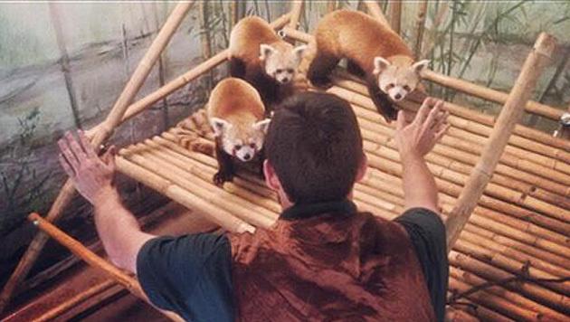 "Tierpfleger stellen ""Jurassic World""-Szene nach (Bild: twitter.com/ElmwoodParkZoo)"