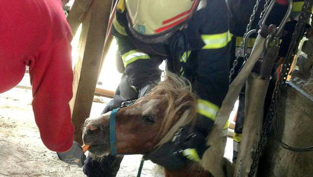 Tierische Rettungsaktionen: Pony und Kater befreit (Bild: APA/FF JUDENDORF-STRASSENGEL)