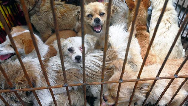 Tausende Hunde in China abgeschlachtet (Bild: AP)