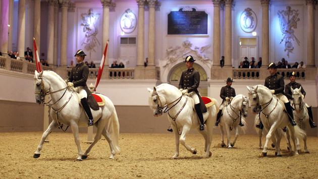 Die Schulquadrille mit zwölf Reitern und ihren Pferden ist der Höhepunkt der Vorführungen. (Bild: APA/GEORG HOCHMUTH)