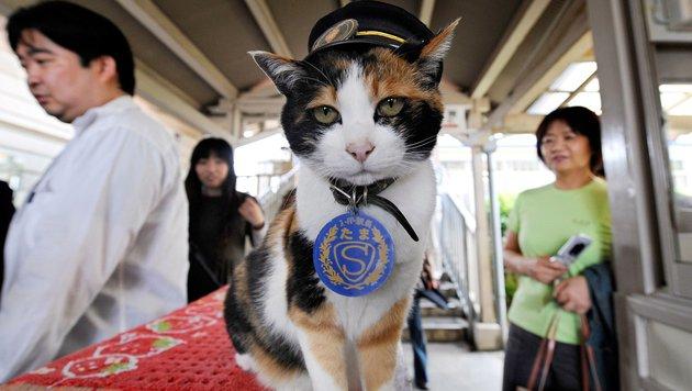 """Als Bahnhofschefin zum Superstar: Katze """"Tama"""" tot (Bild: AFP)"""