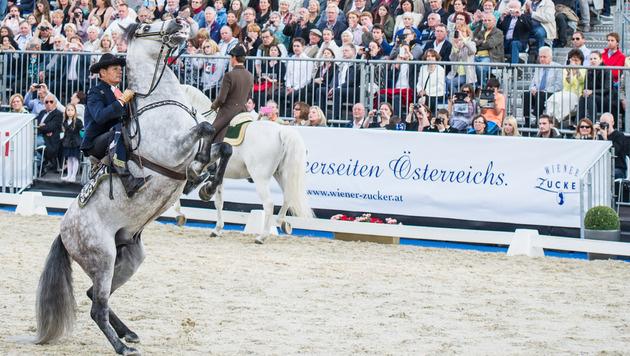 Spanische Reiter und Pferde zu Gast als Hommage an die Geschichte der Hofreitschule (Bild: APA/EXPA/MICHAEL GRUBER)