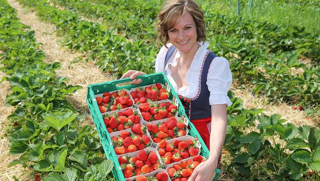Erdbeeren werden bei großer Hitze rasch faul oder schimmelig. (Bild: Gerhard Wenzel)