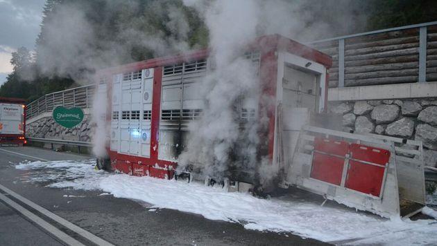 Nach Fahrzeugbrand: 37 Stiere auf A9 eingefangen (Bild: OBI Mag. Gilbert Sandner/FF Ardning)