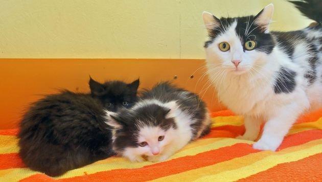 """Katzenmama """"Ursula"""" kümmert sich um ihre Babys """"Eros"""" und """"Eileen"""". (Bild: Christof Birbaumer)"""