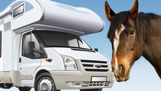 Pferd stürzt im Bezirk Korneuburg auf Wohnmobil (Bild: thinkstockphotos.de (Symbolbilder))