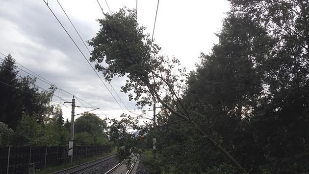 Ein umgestürzter Baum beschädigte in Hafendorf eine Oberleitung. (Bild: APA/FF HAFENDORF)