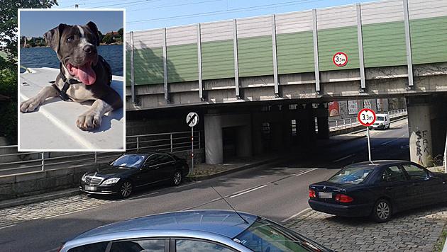 """Unfall bei der Hellwagstraße: Hund """"Pacco"""" wurde lebensgefährlich verletzt. (Bild: Privat, Facebook)"""