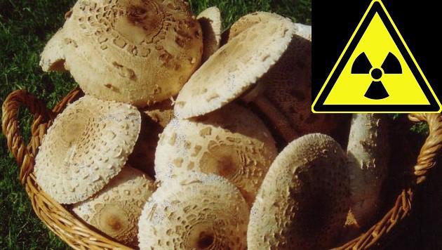Pilze österreich