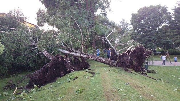 Im Raum Klagenfurt hat der Sturm zahlreiche Bäume entwurzelt. (Bild: Leserreporter Andreas Selisnik)