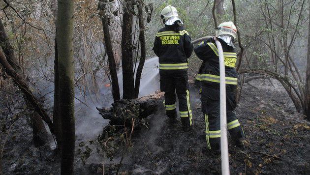 NÖ: Feuerwehren mussten zu 29 Einsätzen ausrücken (Bild: Pressestelle BFK Mödling)