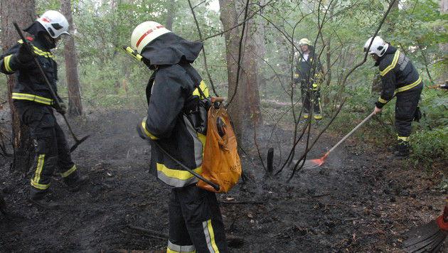 Sieben Feuerwehren waren in Maria Enzersdorf im Einsatz. (Bild: Pressestelle BFK Mödling)