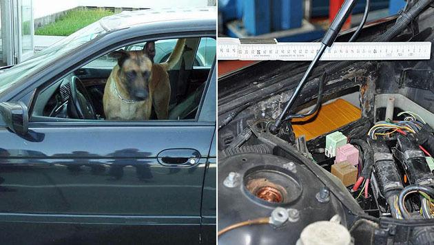 """Polizeihund """"Ripon"""" erschnüffelte das Heroin. (Bild: LPD Salzburg)"""
