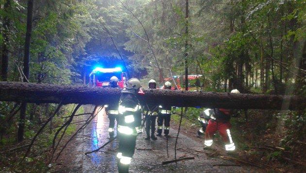Im steirischen Michlgleinz fiel ein Baum auf eine Stromleitung. (Bild: FF Michlgleinz)