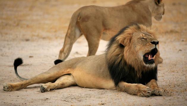 Cecil (Bild: AP)