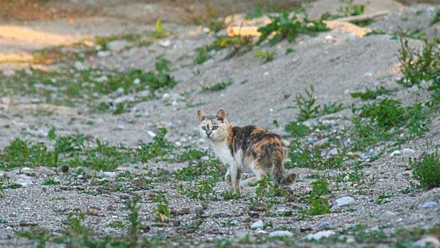 """""""Bitte keine Tiere aus dem Urlaub mitnehmen!"""" (Bild: Pfotenhilfe/Sascha Sautner)"""