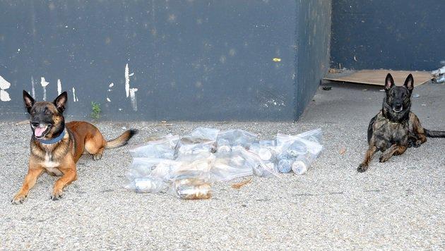 """Die Spürhunde """"Iceman"""" und """"Inya"""" führten die Ermittler zu den Drogenverstecken. (Bild: LPD WIEN)"""