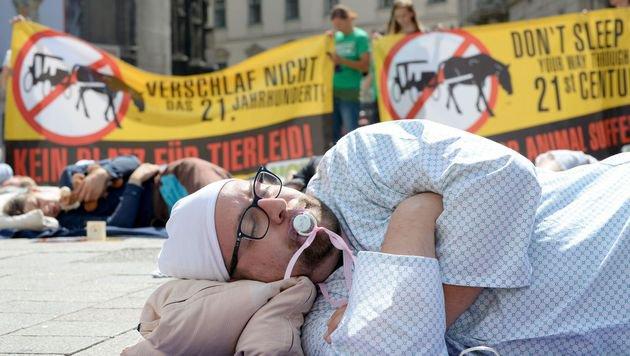 VGT-Tierschützer fordern Fiakerverbot in Wien (Bild: APA/Hans Klaus Techt)