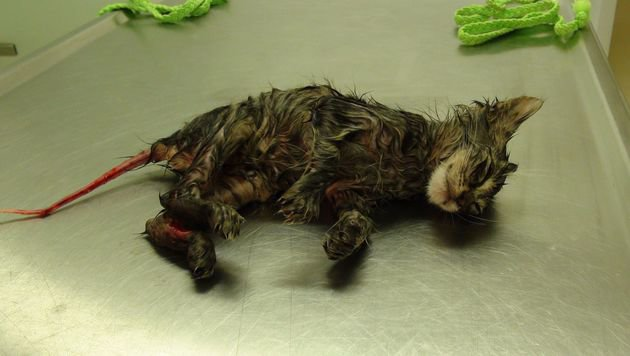 Der Anblick der schwer verletzten Katze ist kaum zu ertragen. (Bild: Pfotenhilfe/Johanna Stadler)