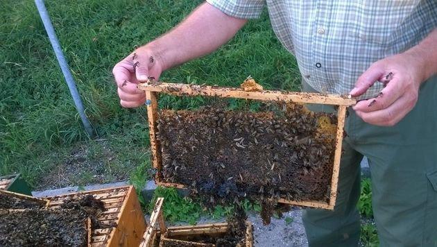 Bienen-Mörder in OÖ warf Stöcke einfach weg (Bild: FF Kremsmünster)