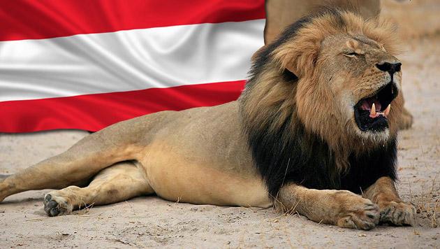 """Der berühmte Löwe """"Cecil"""" fiel einem US-amerikanischen Zahnarzt zum Opfer. (Bild: thinkstockphotos.de, APA/EPA/Zimbabwe Parks and WMA)"""
