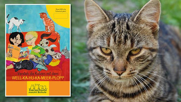 Cat-Care-Packerl zum Weltkatzentag am 8. August (Bild: Isabella Scherabon ,Verein Tierschutz macht Schule)