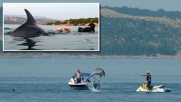 """Kaum wird """"Bobi"""" gesichtet, stürmen zahlreiche Delfinliebhaber ins Wasser."""