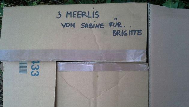 Die Kartons waren beschriftet - doch wer ließ die Meerschweinchen zurück? (Bild: Karl Pollak)