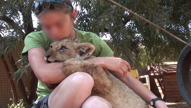 Löwenzuchtfarmen nehmen immer öfter die Hilfe von Freiwilligen in Anspruch. (Bild: Vier Pfoten)