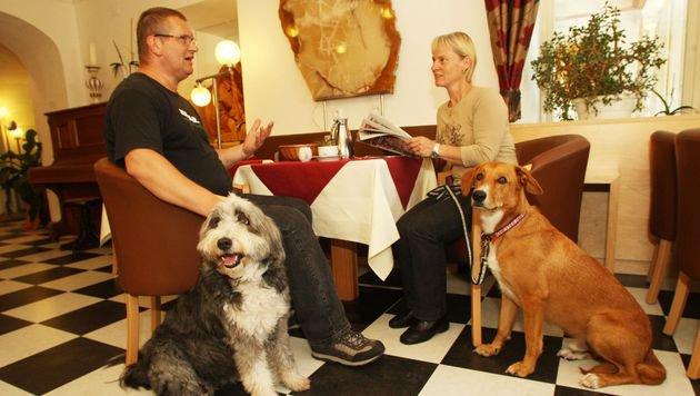 Der Hund darf überall mit. Es gibt auch einen eigenen Speisesaal, wo Vierbeiner willkommen sind. (Bild: Uta Rojsek-Wiedergut)