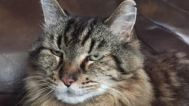 """Corduroy ist 26 Jahre alt - das entspricht 120 """"Katzenjahren"""". (Bild: YouTube.com/Guinness World Records)"""