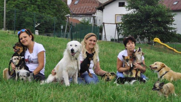 Engagiertes THINO-Team in Salzburg: Isabella , Rita und Klaudia mit ihren eigenen und Pflegehunden (Bild: THINO)