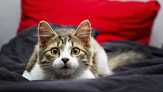 """""""Das denkt sich eure Katze, wenn ihr Sex habt (Bild: thinkstockphotos.de)"""""""