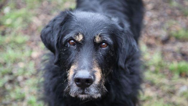 Auch ältere Tiere brauchen ein liebevolles Zuhause (Bild: Pfotenhilfe/Sonja Muellner)