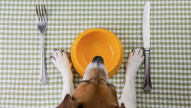 Nassfutter für Hunde: Nur Durchschnittskost? (Bild: thinkstockphotos.de)