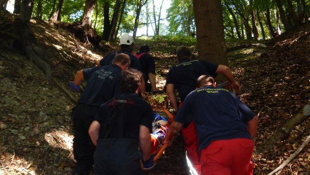93-jähriger Wiener stürzt 30 Meter in Waldstück ab (Bild: MA 68 Lichtbildstelle)