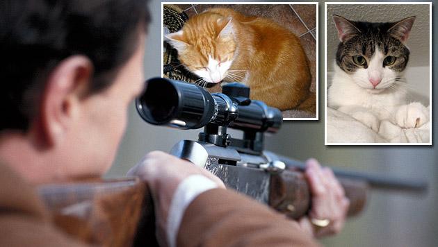 Jäger soll vom Auto aus 50 Katzen erschossen haben (Bild: thinkstockphotos.de, Privat)